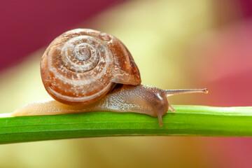 Papiers peints Papillon Close up beautiful Snail in the garden