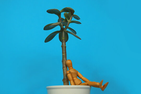 Wooden mannequin sitting on the edge of a white plant pot. The puppet is leaning with it back at a trunk of a succulent tree in front of turquoise background with text space.