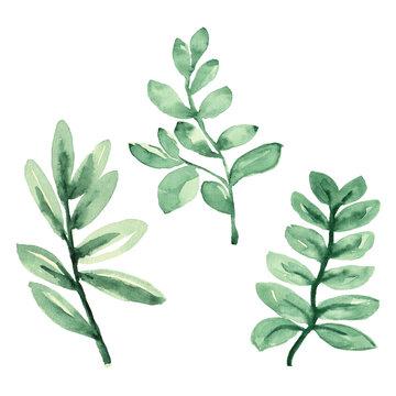 Watercolor Leaf. Watercolor clipart. Watercolor Leaves. Gold Frames. Wedding invite card. DIY PNG Digital.Wedding Greenery.Watercolor set. Eucalyptus Leaf watercolor.