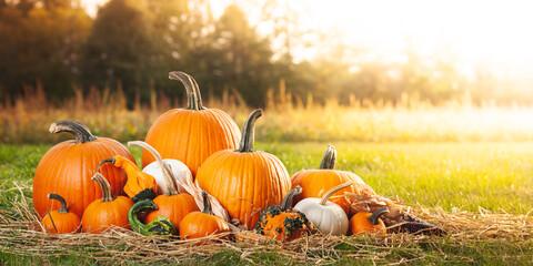 Pumpkins In Soft Autumn Sunlight