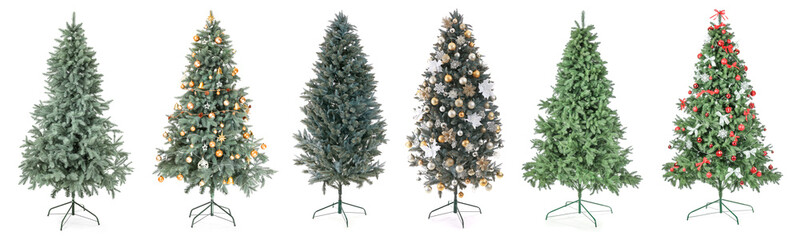Beautiful Christmas trees on white background