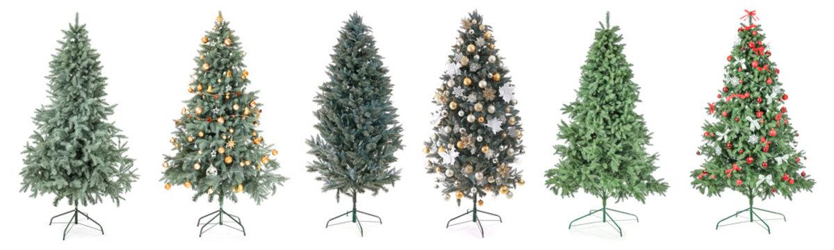 Beautiful Christmas trees on white background