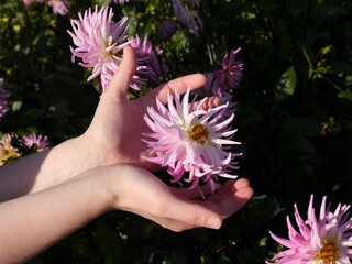 Women's hands reach for the narrow-leaved flower of a dahlia plant, a symbol of humanity's longing for beauty and naturalness