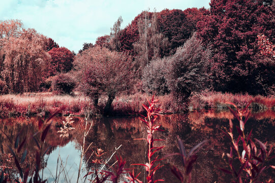Vibrant red trees and pond, Museum Insel Hombroich Park, Neuss, North Rhine-Westphalia, Germany