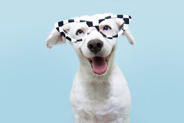 Funny dog wearing glasses celebrating halloween or carnival. Happy expression. Isolated on blue background.