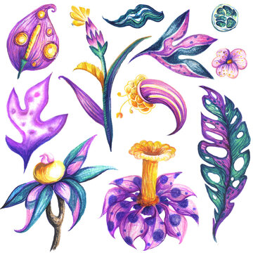 tropical fantasy flower silhouette with colored pencils painted texture. Doodle style element