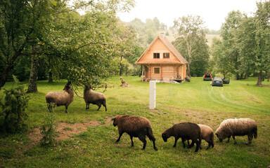 Photo sur Plexiglas Europe de l Est Polish village in late summer. Eastern Europe countryside.