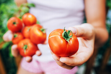 girl holding red ripe tomatoes in her hands. Healthy eating