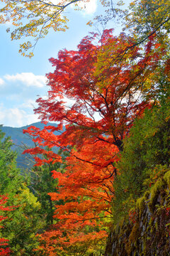 吉野山の紅葉