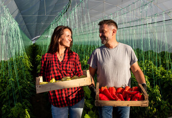 Two middle-aged farmers working together in a greenhouse, holding box of paprika in hands.
