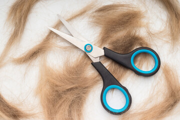 Cropped blonde hair and scissor on white background