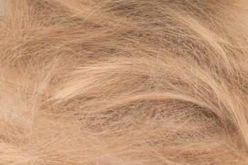 Tangled cut off blonde hair, flat lay