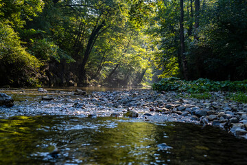 beautiful morning sun rays in green forest by the river