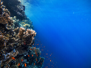 Underwater scene with coral reef in the Red Sea and rays of the sun shining through the water