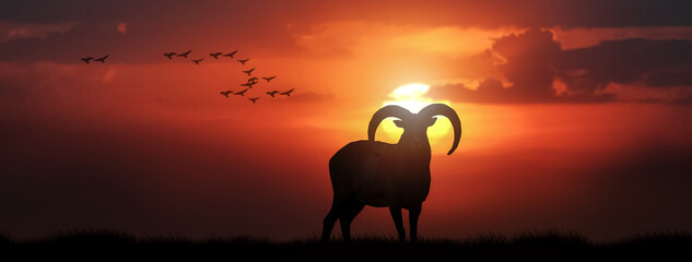 Silhouette of a goat on the grass in orange sunset sky.