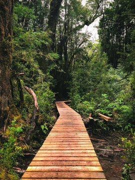 Panoramic shot of a wooden pathway in the middle of a forest
