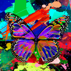 butterfly of the rainbow