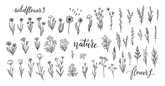 Wildflower line art set. Flower doodle botanical collection. Herbal and meadow plants, grass. Vector illustration isolated.