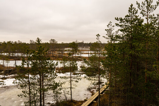 Viru raba (Viru bog) in Estonia in Lahemaa National Park with a boardwalk (accessible to wheelchair) with an observation tower in the middle of it. Captured in winter.