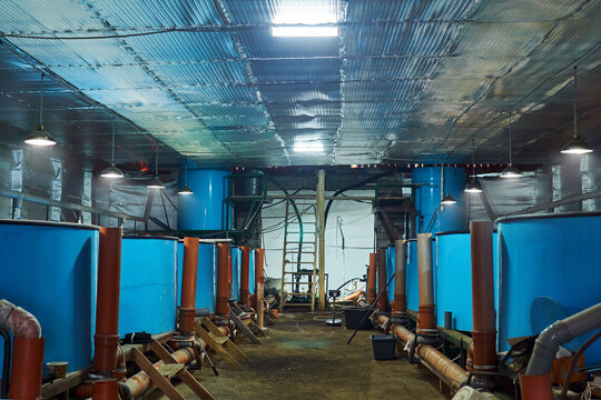 interior of a workshop with tanks for keeping fish in a fish hatchery