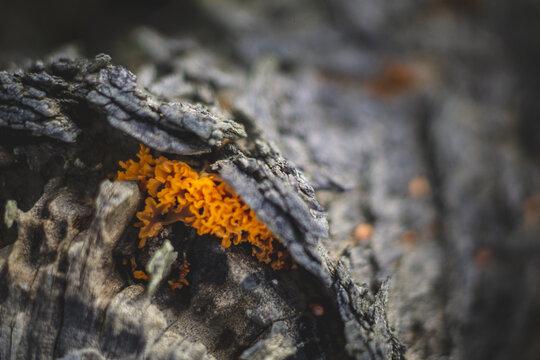 orange mushroom on tree bark