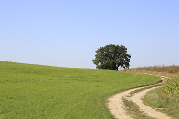 Wanderweg Natur Wald Wiese Feld