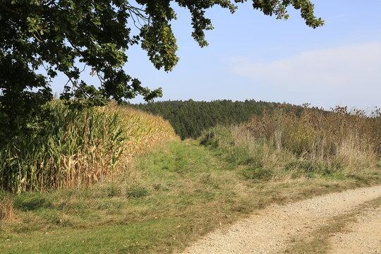 Feldweg Wanderweg Natur Spaziergang Wald und Wiese