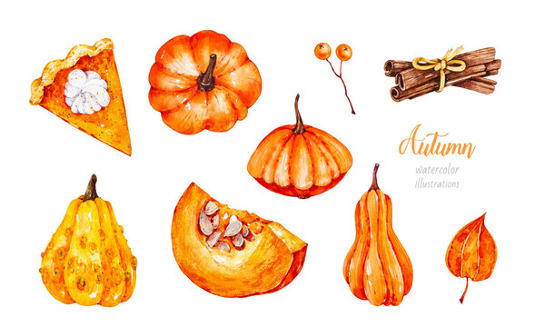 Pumpkins. Squash. Cinnamon sticks. Piece of pumpkin pie. A piece of pumpkin. Autumn harvest. Watercolor botanical hand drawn illustration. Physalis