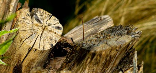 Fototapeta korzeń z bliska obraz