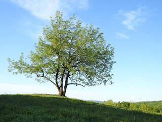 green tree in a field