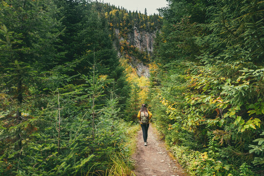 Autumn hike through nature. Hiker woman walking on trail path in forest of pine trees. Canada adventure travel tourist with backpack trekking in outdoors.