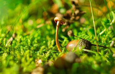 Fototapeta grzybek na mchu obraz