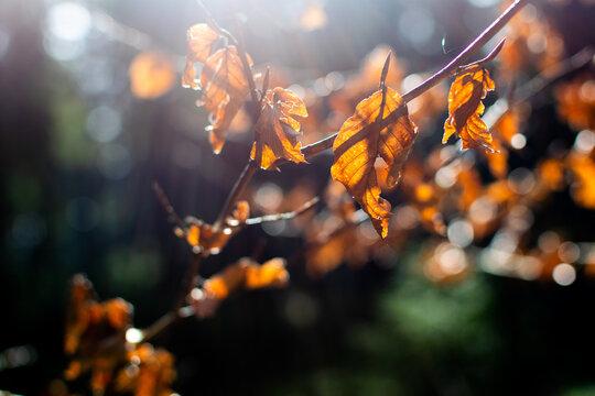 Herbstblätter im Wald, Herbstbeginn