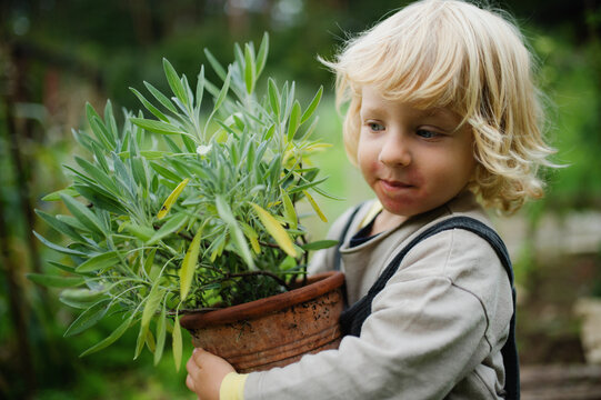 Portrait of small boy with eczema standing outdoors, holding potted plant.