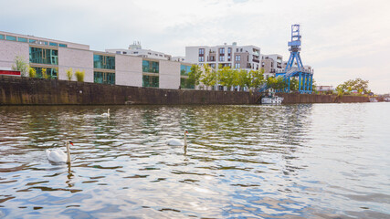 Harbor in Offenbach in summer with swans in the foreground