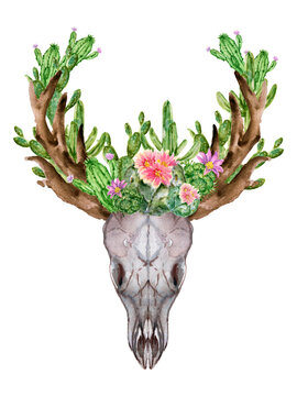 Antler Deer animal skull with cactus succulants botanical Watercolor in vintage style hand painting on white