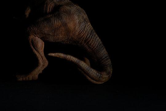 Détails de dinosaure dans la pénombre
