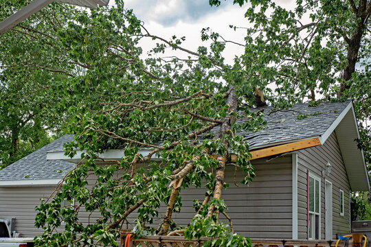A large tree with green leaves fallen on a residential rooftop during a summer storm