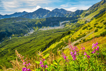 Mountain landscape with fireweed flowers in Rohace area of the Tatra National Park, Slovakia, Europe.