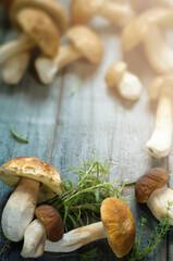 Mushrooms cep in autumn season; fresh wild mushrooms on grey wooden table