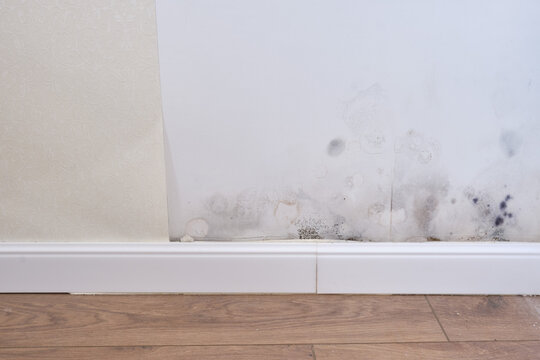Black mold on the wall with wallpaper and plinth