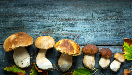 Mushrooms cep in autumn season