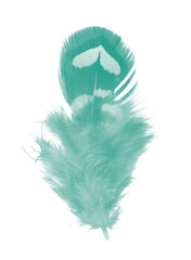 Wall Mural - Beautiful feather color light green isolated on white background