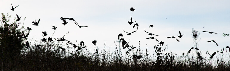 bird silhouettes flying away banner