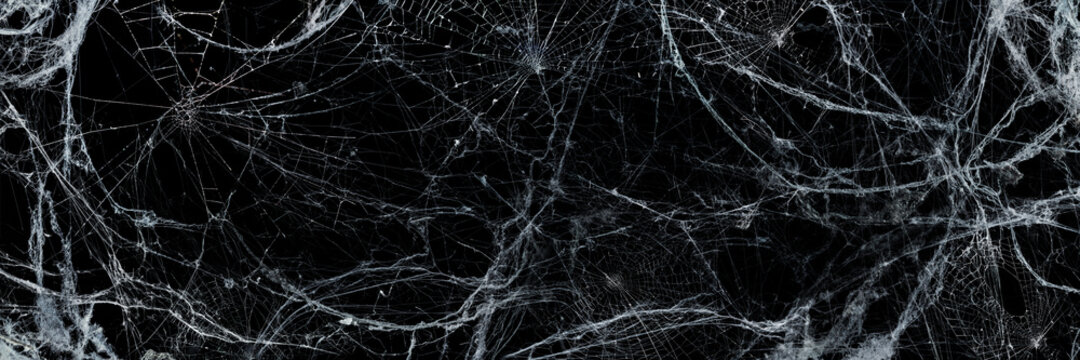 Spooky Cobweb In The Darkness - Halloween Background