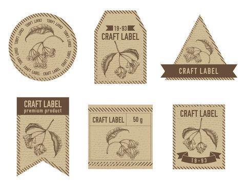Craft labels vintage design with illustration of ardisia