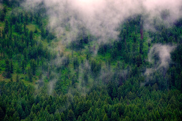 Mountains Forest Mist Pine Foggy Misty Trees