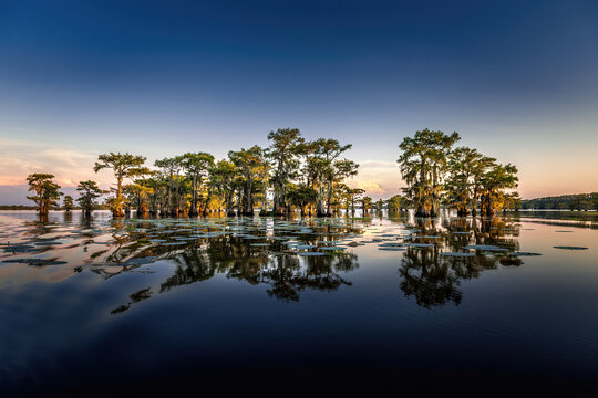 Early eveing with cypress trees in the swamp of the Caddo Lake State Park, Texas