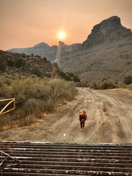 Dog on road mountains red sky
