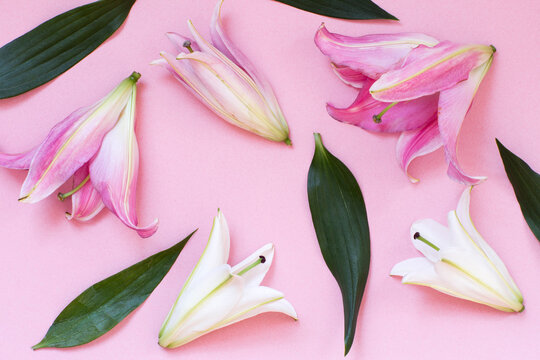 Lillies on a pink background